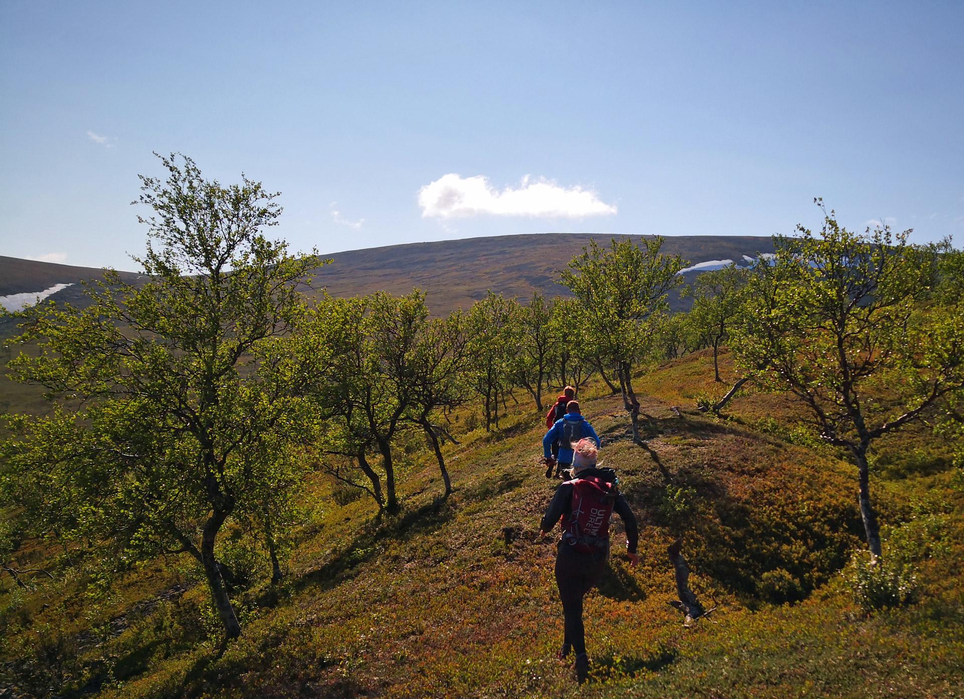 Polkujuoksu tunturit, Lappi trail running UK-puisto kansallispuisto
